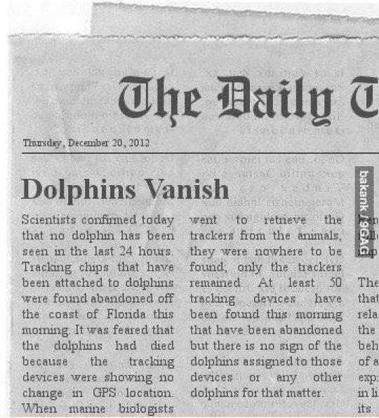 Dolphins Vanish