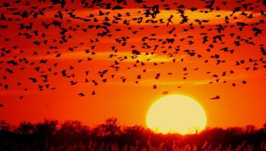 Sunrise - Wikimedia Commons